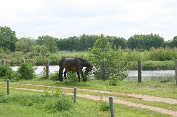 Pferd vom Pferdehof