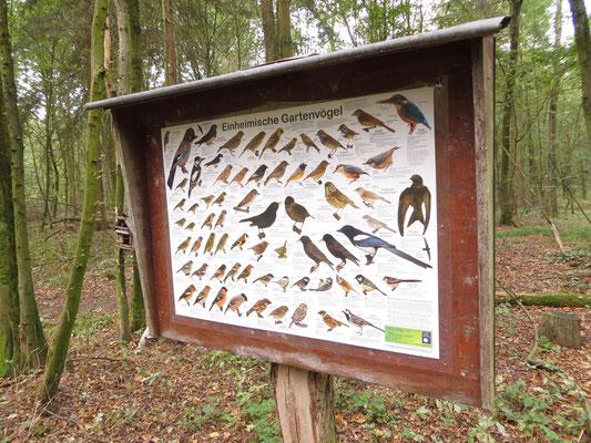 Das neue Poster im Wachenbuchener Wald