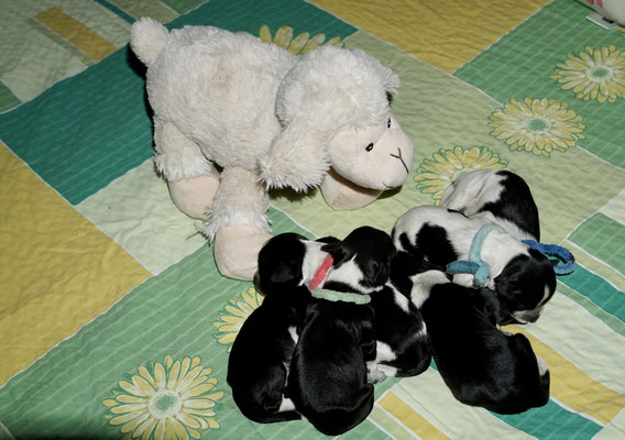 Noch sind 6 Döschen für ein Schaf notwendig 😃