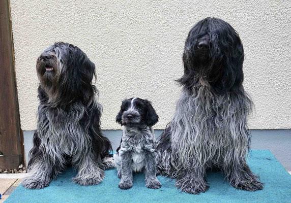 ....und von Mama Bisou und Papa Cooper