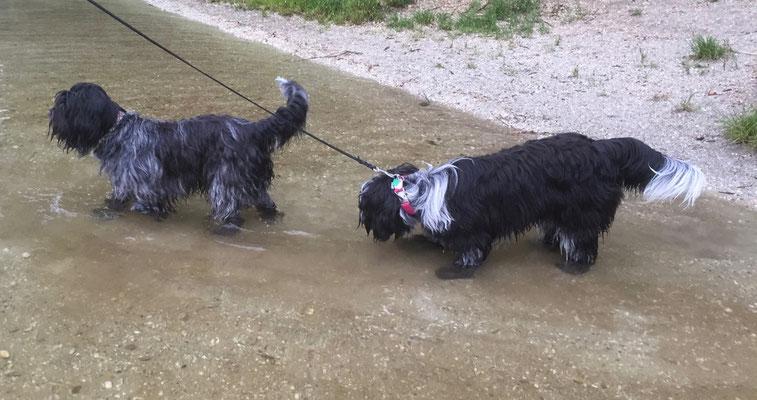 Bisou und Jane nach getaner Arbeit beim Baden