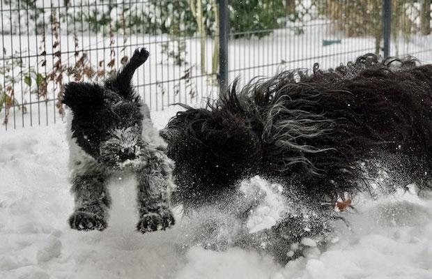 Jule (Bilea) und Mama Bisou beim Toben im Schnee