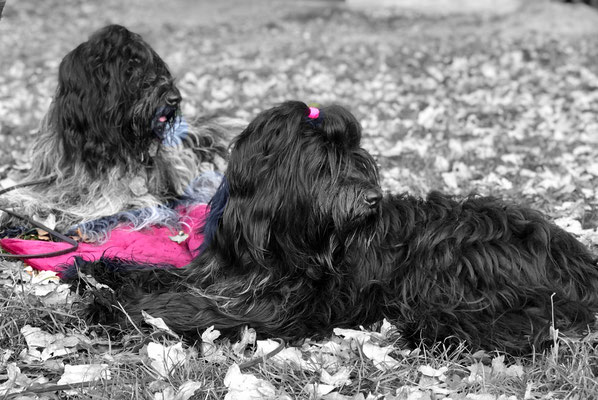 Cooper und Camille warten auf ihren Start