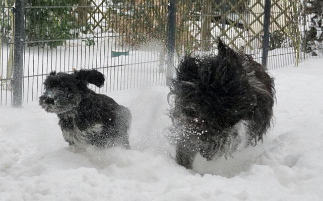 Auch Biina tobt mit Mama gern im Schnee