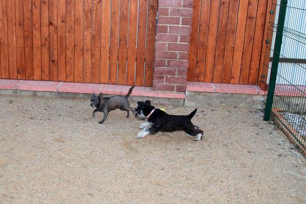 Мики и Бася
