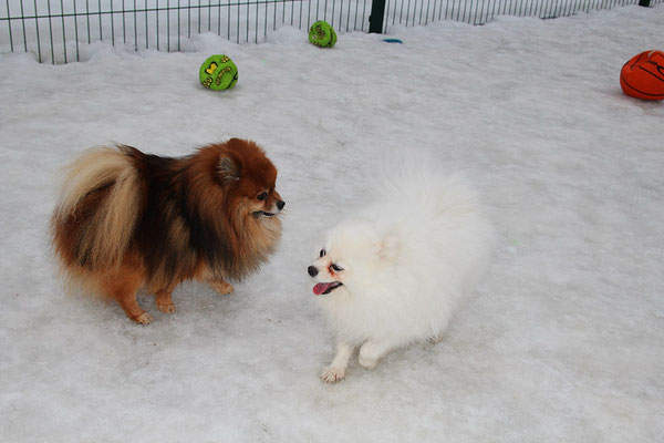 Лёша и Гера