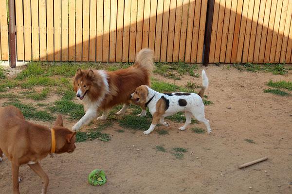 Рекс, Ася и Буся