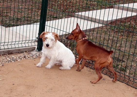 Руфи и Даня