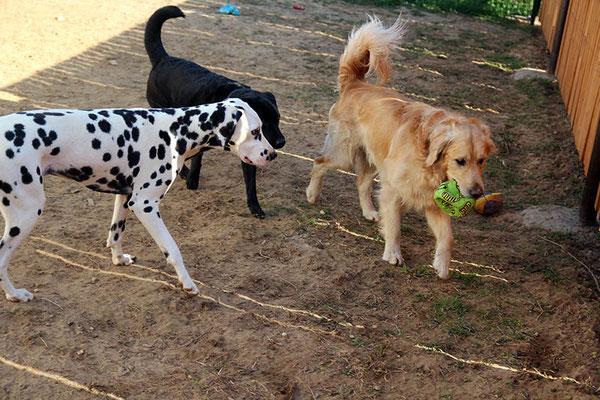Лилу, Ода и Ларс (на сайте есть отзыв владельцев)