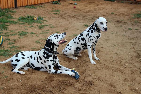Флинт и Лилу