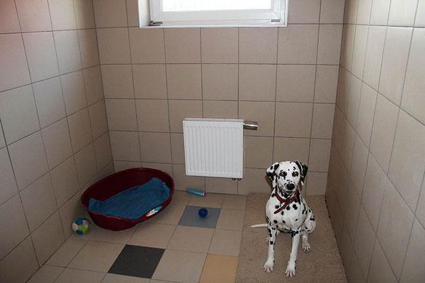 Передержка собак в Дедовске. Тринити в своей комнате.