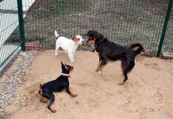 Чарли, Руфи и Брауни - снова собрались у нас все вместе:)
