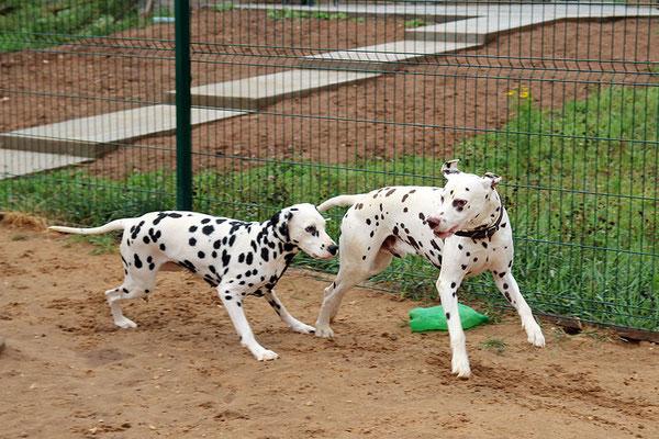 Флинк и Лилу