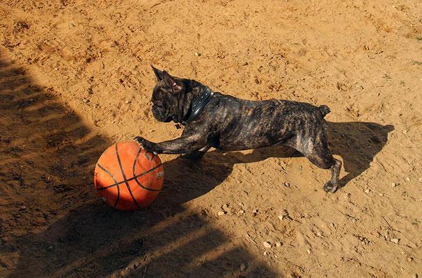 Тайсон - футболист-баскетболист:)  (на сайте есть отзыв владельца)
