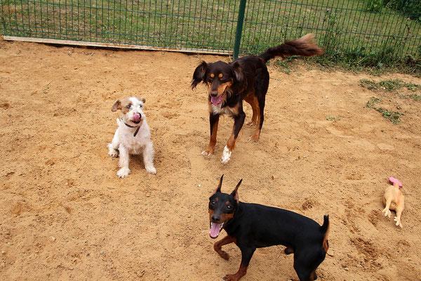 Руфи, Брауни и Чарли