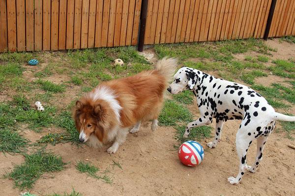 Рекс и Найка