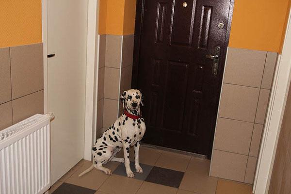 Гостиница для собак. Тринити собирается на прогулку.