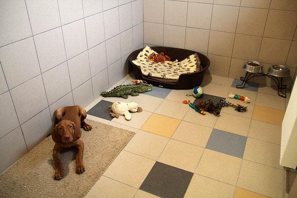 Гостиница для собак (передержка собак)
