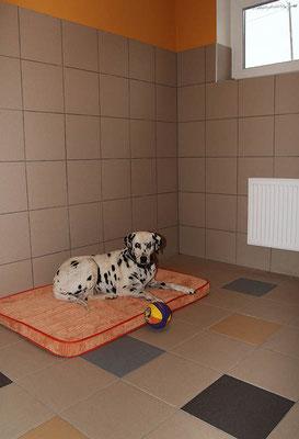"Миля (Гостиница для собак ""Далматин.ру"")"