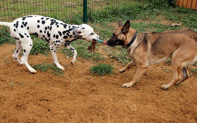 Лилу и Грета