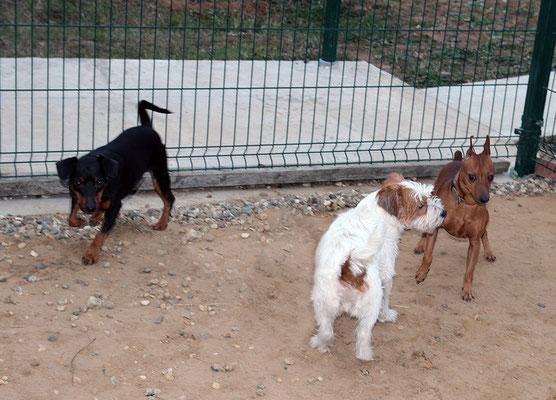 Руфи, Грем и Даня