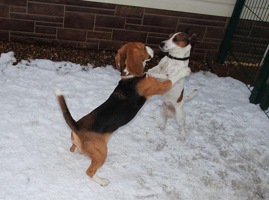 Дейси и Бакс