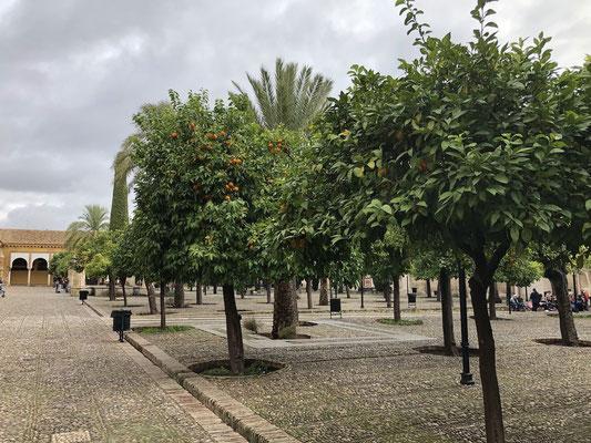 La cour des orangers, lieu des ablutions.