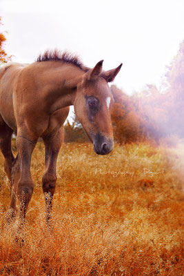 #foal #poulain #cheval #horse