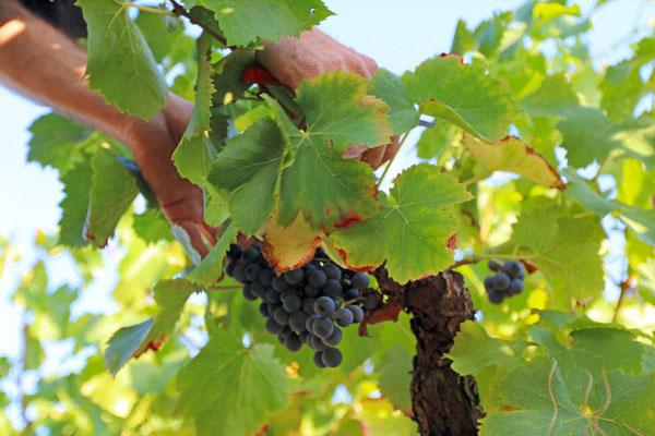 Vacances chez des viticulteurs ardéchois