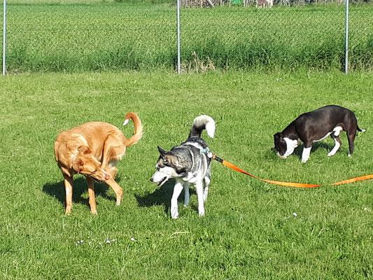 Gruppe für große Hunde