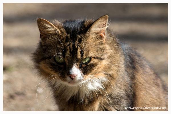 Katze (Art.-Nr. 7227)