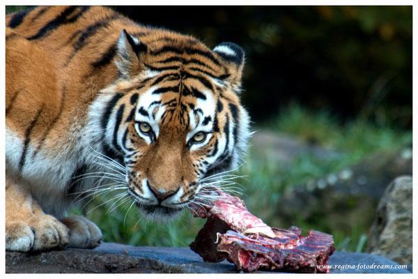 Armur-Tiger (Art.-Nr. 7516)