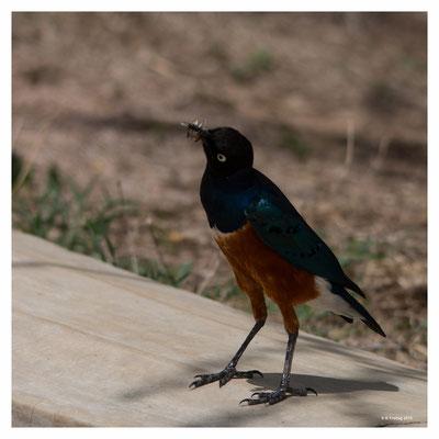Sunbird (7751)