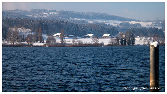 Blick über den Greifensee (8779)