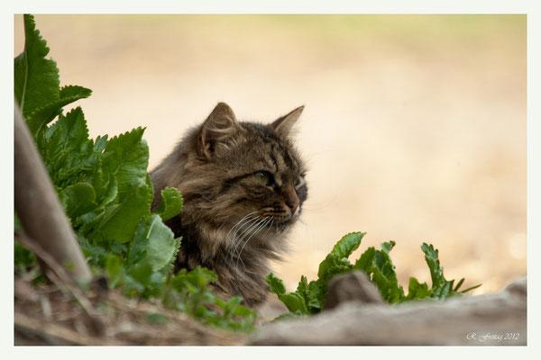Katze (Art.-Nr. 7446)