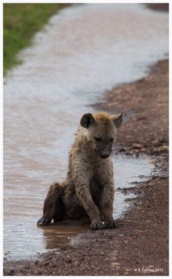 Hyäne im Ngorongoro-Krater, geniesst die Abkühlung in einer Pfütze (0049)