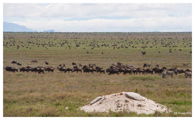 Serengeti 3629