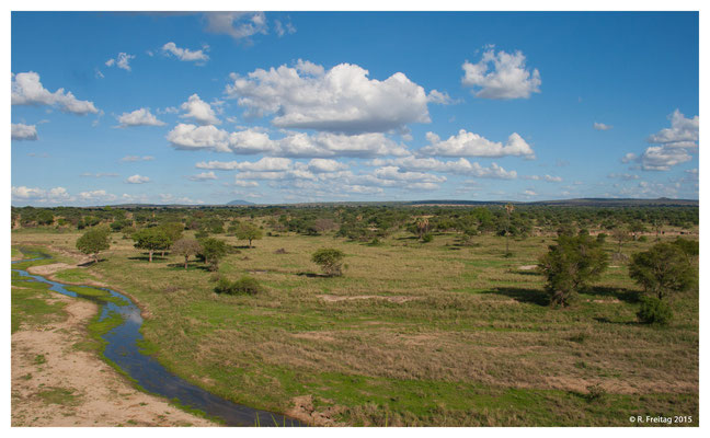 Tarangire Nationalpark (3988)