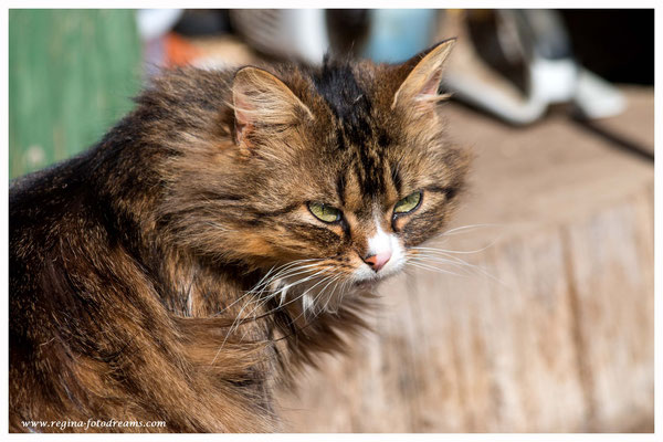 Katze (481)