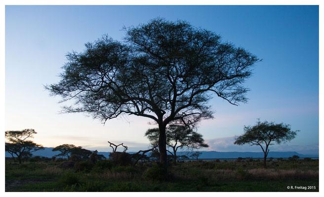 Blaue Stunde im Tarangire Nationalpark (4056)