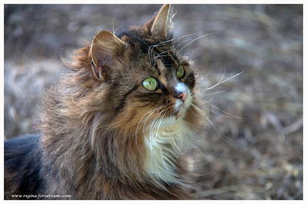 Katze (Art.-Nr. 9405)