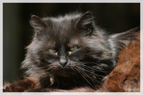 Katze (Art.-Nr. 2499)