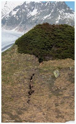 Risse im Boden. Ein Resultat der Erderwärmung.