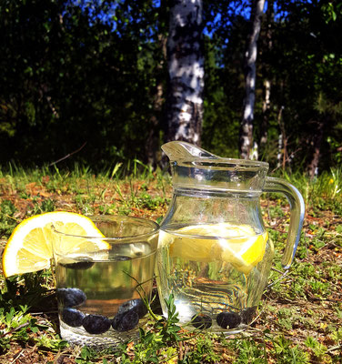 Pures Birkenwasser