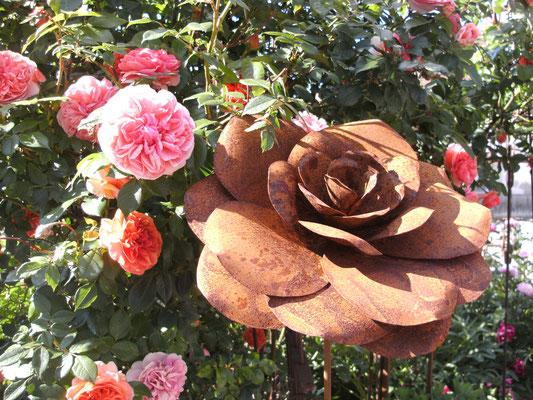 Edelrost: die Rose