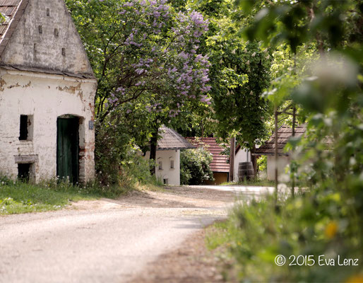 Am Kellerberg unterhalb des Weingartens....