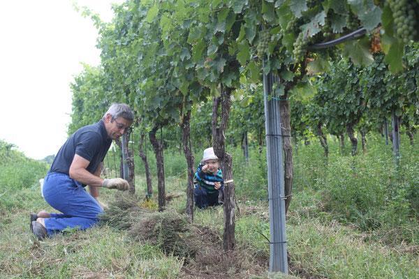 Hans Zillinger bei der Kräuterernte im Weingarten für Extrakte und Tees.