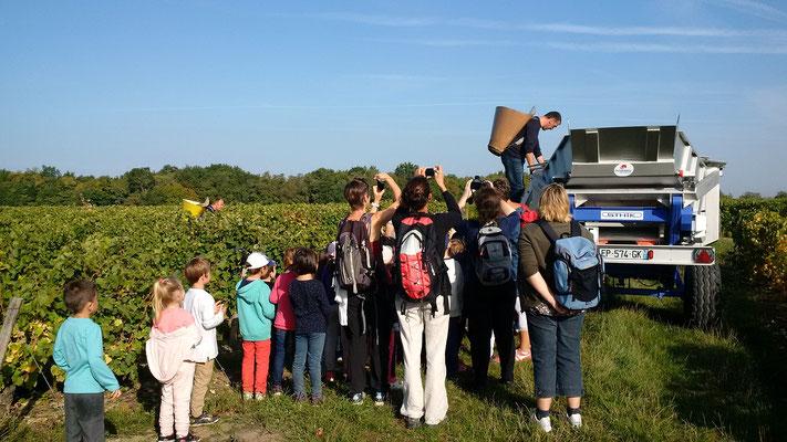 decouverte-vignoble-vendanges-enfants-classes-maternelle-primaire-Touraine-Vallee-Loire-Vouvray-Tours-Amboise-Rendez-Vous-dans-les-Vignes