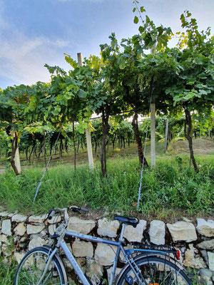 oenotourisme-cyclotourisme-vignoble-Italie-vin-blanc-Soave