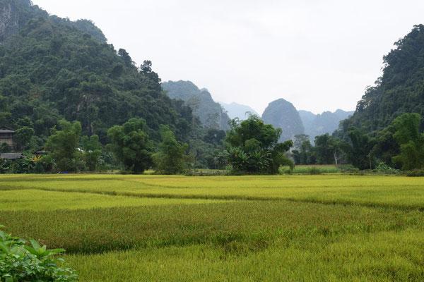 Rizières dans la région du Lac Ba Be - Vietnam